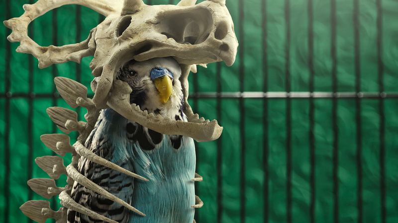 Photograph of Budgie adorning a CG dinosaur skeleton