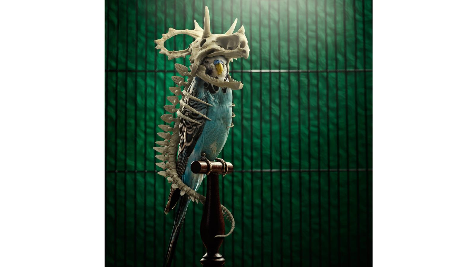 Full image of Dino Bird, photograph of budgie adorning a CG dinosaur skeleton